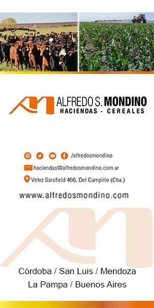 Aldredo_Mondino_300x600