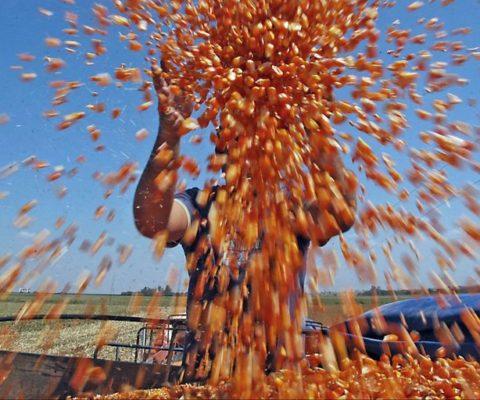 Retenciones e intervención: las preocupaciones de la cadena del maíz
