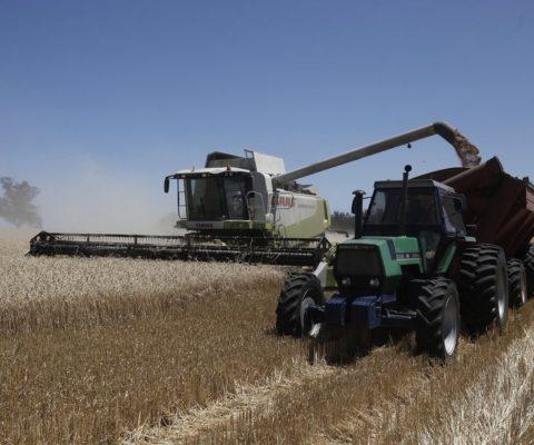 Tras el límite al maíz: el trigo quedó en el centro de los temores del sector privado