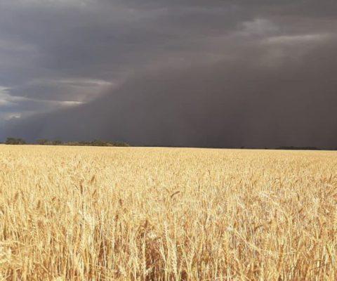 Nuevas tormentas provocaron más lluvias y vientos que superaron los 60 km/h